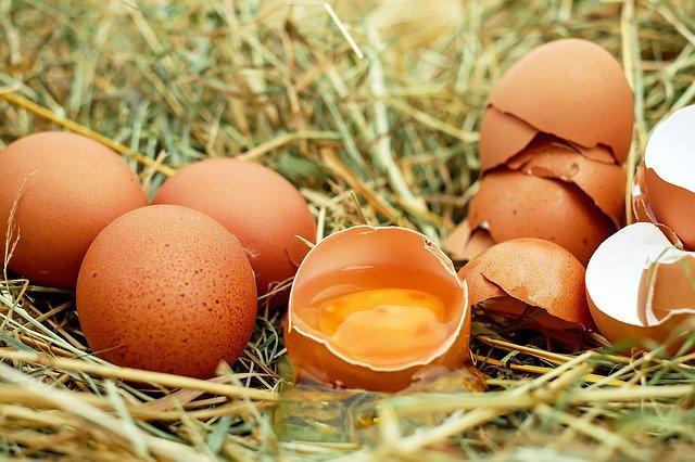 Die besten ✅ Eiweißquellen für Immunsystem ➡️ Pflanzliche oder tierische Proteinquellen