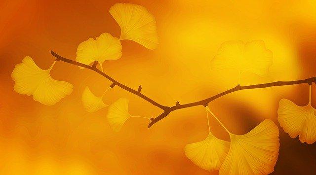 Ginkgo biloba verbessert Gedächtnis und Konzentration